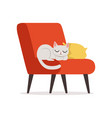 lovely white cat sleeping on a pillow on a red vector image
