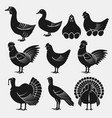 poultry silhouettes set domestic fowls icons vector image vector image