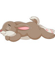 rabbit sleeping isolated on white vector image vector image