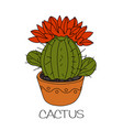 cactus with red flowers vector image