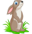 cartoon funny rabbit on the grass vector image vector image