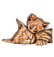 ginger cat isolated on white family cat vector image vector image