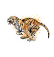 tiger running from a splash watercolor hand vector image vector image