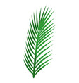 leaves palm plant vector image
