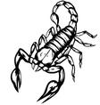 scorpion2 vector image