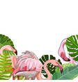 background with flamingos in the leaves vector image