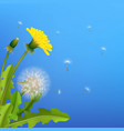 dandelion bush flying seeds blue background vector image
