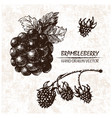 digital detailed brambleberry hand drawn vector image vector image