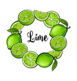 round frame of green lime fruits with place for vector image vector image