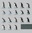 set of flat geometric species of penguins vector image vector image