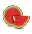 watermelon collection vector image vector image