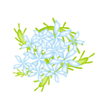 Blue Cape Leadwort Flower or Blue Plumbago Flower vector image vector image