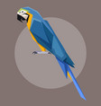 flat polygonal blue-and-yellow macaw vector image vector image