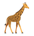 giraffe in a cartoon flat style on white vector image