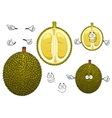 Thai smelly green durian fruit vector image vector image