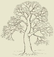 tree with bare branches vector image vector image