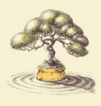 bonsai tree spa and relaxation design vector image vector image