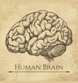 brain retro anatomic etching vector image vector image