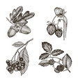collection of highly detailed hand drawn acorn vector image vector image