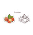 colorful and monochrome contour drawings of peeled vector image vector image