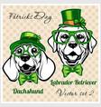 dachshund and labrador retriever - dog heads vector image vector image