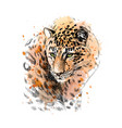 portrait a leopard from a splash watercolor vector image vector image