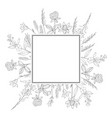 frame with hand drawn wild herbs and flowers vector image vector image