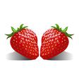 juicy berries Strawberries vector image