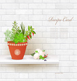 shabby chic brick wall with different herbs in pot vector image vector image