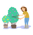 the gardener cuts the bushes vector image