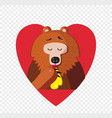 cute cartoon bear eating honey inside of red vector image