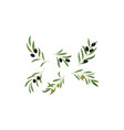 olive branches with leaves and olives vector image