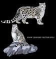 snow leopard vector image vector image