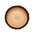texture of sawn wood brown object vector image