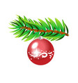 green spruce branch with red ball isolated vector image