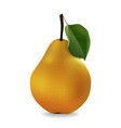 juicy pear in realistic style vector image