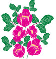 painted pink peony of a crimean vector image