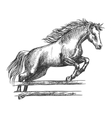 Strong horse jumping over barrier vector image vector image