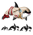 the set of killer whale or orca isolated on a vector image