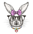 fashion bunny girl with bow and vector image