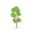 biag tree isolated white flat of tall tree vector image vector image