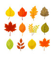 colorful autumn leaves set vector image