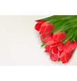 Flower background with red tulips and sample text vector image