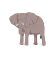icon african elephant vector image