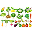 Various kind of vegetables vector image vector image