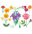cartoon petal vintage floral bouquet garden vector image