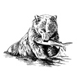 Hand sketch bear catching fish vector image