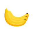 bunch banana yellow ripe fruit vector image