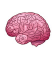 cartoon of a human brain with vector image