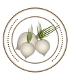 Fresh onions vegetables vector image